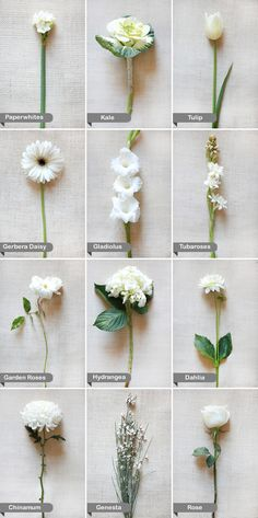 Essential white wedding flower guide names types pics white wedding flower guide mightylinksfo