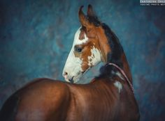 Best photographs of horses by Ekaterina Druz Equine Photography