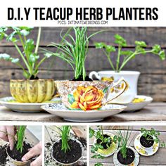 DIY Teacup planters. this would be very cute in my kitchen window.