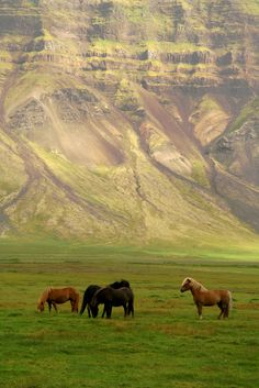 Visit Iceland in the summer, and go into remote areas. Icelandic horses in Snæfellsnes, West Iceland All The Pretty Horses, Beautiful Horses, Animals Beautiful, Beautiful World, Beautiful Places, Beautiful Pictures, Beautiful Scenery, Icelandic Horse, Mundo Animal