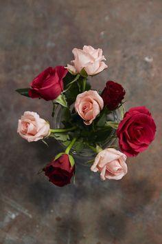 Rose, Flowers, Plants, Floral Arrangements, Pink, Plant, Roses, Royal Icing Flowers, Flower