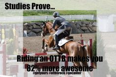 Riding an OTTB makes you 82% more awesome