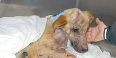 ****IMPORTANT  Please sign to stop the abuse. Please speak out for those that cannot and petition the government that strict laws need to be put into place for animal abuse.