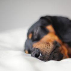 Sleepy zzzzzz