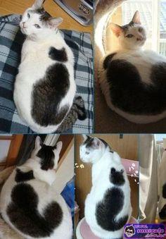 gato recursivo