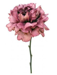Watercolour Flower Portraits - Google 搜尋