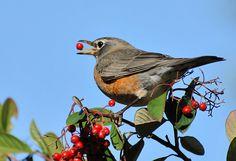 bird catching food