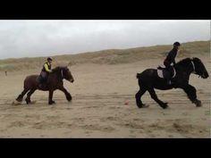 Belgische Trekpaarden onder het Zadel - YouTube