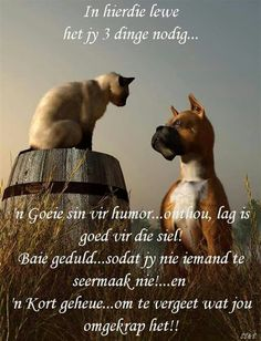 In hierdie lewe het jy 3 dinge nodig: 'n sin vir humor, baie geduld en 'n kort geheue Pray Quotes, Bible Verses Quotes, Quotes About God, Life Quotes, Afrikaanse Quotes, Sweet Quotes, Special Quotes, Inspirational Message, Inspiring Quotes