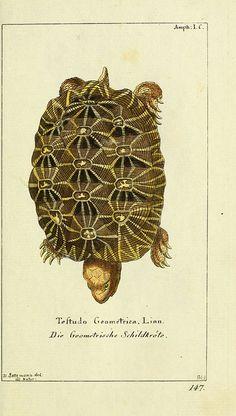 Gottlieb August Lange, Gemeinnüzzige Naturgeschichte des Thierreichs, Berlin,1780-1789