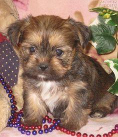 awww he/she looks like my little Tucker as a puppy