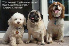 The Average Dog