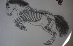Horse Skeleton - Jumping by Howlecho.deviantart.com on @deviantART