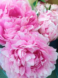 would love to carry a bouquet of peonies!