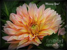 Missing You - A Greeting by Photographic Art and Design by Dora Sofia Caputo