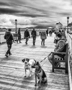 'Walkies?' -  Llandudno Pier 2016 by PhillConnellPhotos.com