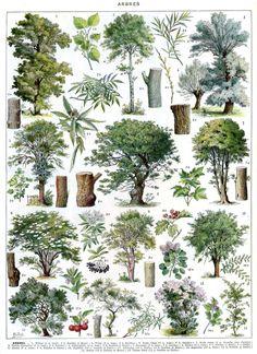 Vintage TREES poster - Vintage Botanical Print - 1930