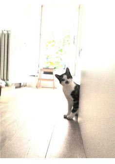 My cat Tiger - its a deep love