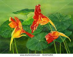 Image result for nasturtium leaves watercolour paintings