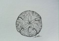 """Theme: Sea Shells - ink drawing; sketch - September 25 - Drawing number for the year #268 - 2014 - see below '#tf sea shells sept' for the archive of this month. """"The sand dollar was easy to do and fast and I thought I captured the texture of the shell."""" - Steve www.thursdayfile.com"""
