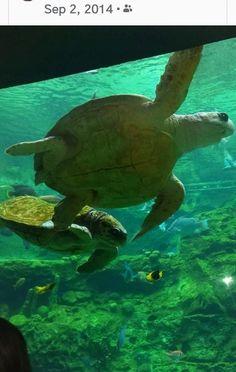 Turtle Time, Animals, Animales, Animaux, Animal, Animais