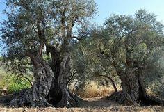 The Sisters, Lebanon, http://bit.ly/1bXYFQr