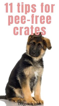 Crates are such wonderful things, and can help you out in a lot of ways. One of the things they're great for is helping you with potty training your puppy! Or at least, that's what you've been told. But what about the fact that your puppy keeps peeing in his crate? That's not supposed to happen, is it? If you're feeling frustrated with your puppy peeing in his crate, don't worry—you're not alone... #puppytraining #pottytraining #cratetraining Puppy Training Guide, Potty Training, Training Your Dog, Crate Training, Training Tips, Best Dog Quotes, Hyper Dog, Excited Dog, Dog Smells