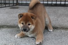 I. WANT. A. PUPPY.