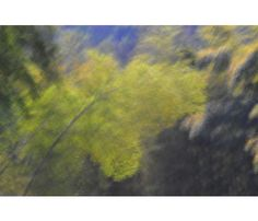 X로거가추천하는5월사진전시회입니다. 바로라규채작가님의Bamboo, 空에 美親다라는전시회인데요,5월9일부터5월22일까지갤러리나우에서열리고있습니다.대나무로반야심경의'공'을표현하는독특한방식의사진인데요불교문화에관심있으신분들이보시면좋아하실것같네요.자세한내용은링크를참고해주세요~ http://blog.naver.com/fujifilm_x/150138229587