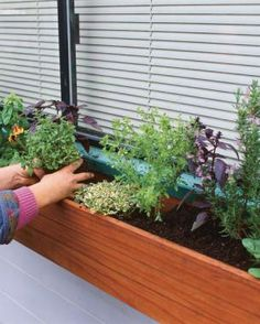 Herbs for Every Window Box | Fine Gardening - lots of good information for how much sun different types of herbs need
