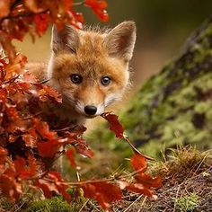 15 animals enjoying the magic of autumn, gurantee to put a smile on your face :)