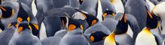 A quest for agreement over collective nouns - Oxford Dictionaries article