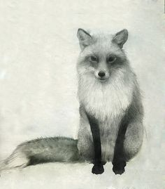 Red Fox Drawing