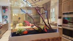 Home Aquarium Fish, Wall Aquarium, Aquarium Stand, Aquarium Design, Aquarium Cabinet, Fish Aquarium Decorations, Saltwater Fish Tanks, Saltwater Aquarium, Freshwater Aquarium