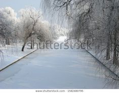 Park Winter Alley Frozen White Environment Stock Photo (Edit Now) 1582480795 Photo Editing, Royalty Free Stock Photos, Frozen, Environment, Park, Winter, Illustration, Photography, Outdoor