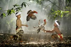 Suradita Village, West Java, Indonesia. Children playing with their roosters.  By Ario Wibisono