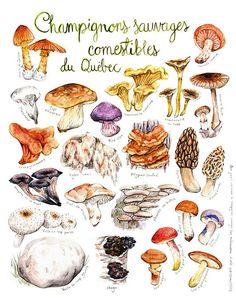 Imprimé Champignons sauvages comestibles du par MathildeCinqMars
