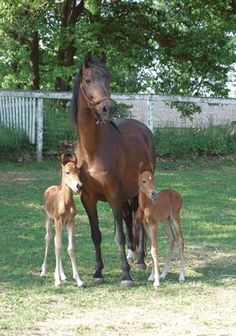GREENE: Twin horses born on Milford Farm, how cute are they?????