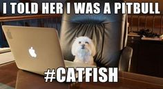 Have you ever been catfished? We're recruiting the best catfish stories for the MTV show @mtvcatfishcasting and we want to hear your crazy stories! Apply HERE: www.betches.co/catfish Also LINK IN BIO