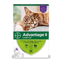 Afflik Advantage Ii Flea Prevention For Large Cats 6 Monthly Treatments Walmart Com Flea Medicine For Cats Tick Treatment For Cats Flea Prevention For Cats