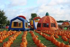 Flower Mound Pumpkin Patch Flower Mound, Texas #Kids #Events Flower Mound Pumpkin Patch, Denton County, Texas Travel, Dallas Texas, Kids Events, Fort Worth, Oh The Places You'll Go, Farms, Jet