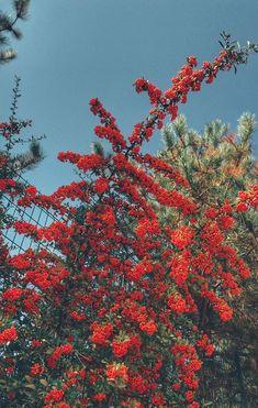 Wallpaper macbook flowers art Ideas for 2019 Flower Iphone Wallpaper, Red Wallpaper, Flower Backgrounds, Nature Wallpaper, Trippy Wallpaper, Kawaii Wallpaper, Galaxy Wallpaper, Wallpaper Backgrounds, Aesthetic Backgrounds
