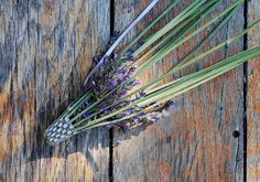 ... A few years back, someone in my handspinning guild brought in a huge harvest of lavender flowers, to share with everyone at the me...