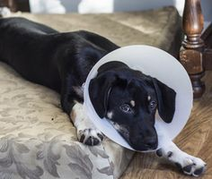 Should you postpone getting your cat spayed? Do you worry your dog will gain weight if neutered? Get the facts about spay and neuter surgery for cats and dogs.