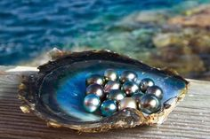 Seashell & Pearls [brown-eyed-whimsey.tumblr.com]