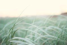 shuttertogluv:  ~ it's all relative ~ Needles - Lisa Hannigan