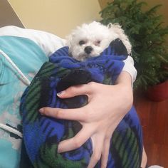 Our fur-baby was bundled up during the storm. #happybaby