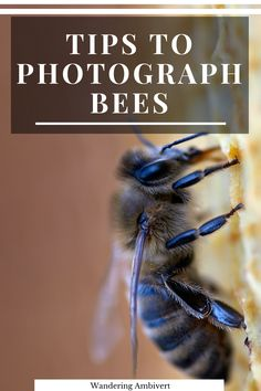 Tips to Photograph Bees – Wandering Ambivert Photography Tips Iphone, Landscape Photography Tips, Photography Basics, Photography Tips For Beginners, Nikon Photography, Photography Tutorials, Creative Photography, Amazing Photography, Better Photography