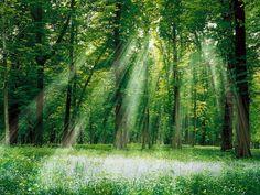 Florestas - Papéis de Parede Grátis para PC: http://wallpapic-br.com/paisagens/florestas/wallpaper-28750
