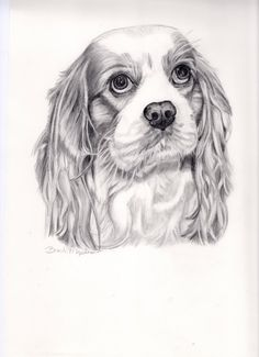 This listing is for a custom graphite pencil drawing of your pet in your choice of sizes (5x7, 8x10, 9x12, 11x14). The sample image shown is a